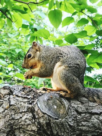 Squirrel time