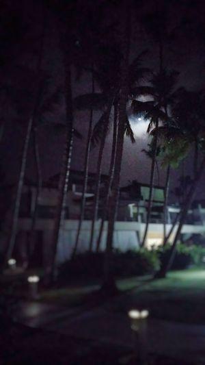 Moonlight Under The Moon Night Outdoors Dark Outdoors