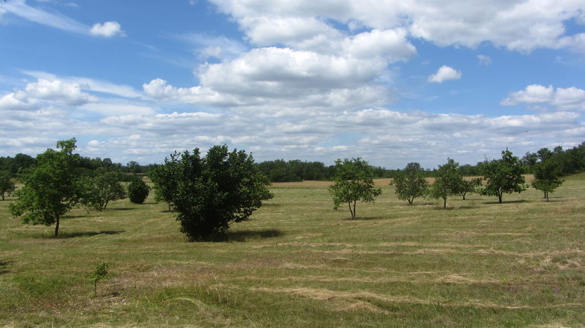 France GR65 Via Podiensis Beauty In Nature Cloud - Sky Day Field Grass Growth Landscape Nature No People Outdoors Scenics Sky Tranquil Scene Tranquility Tree