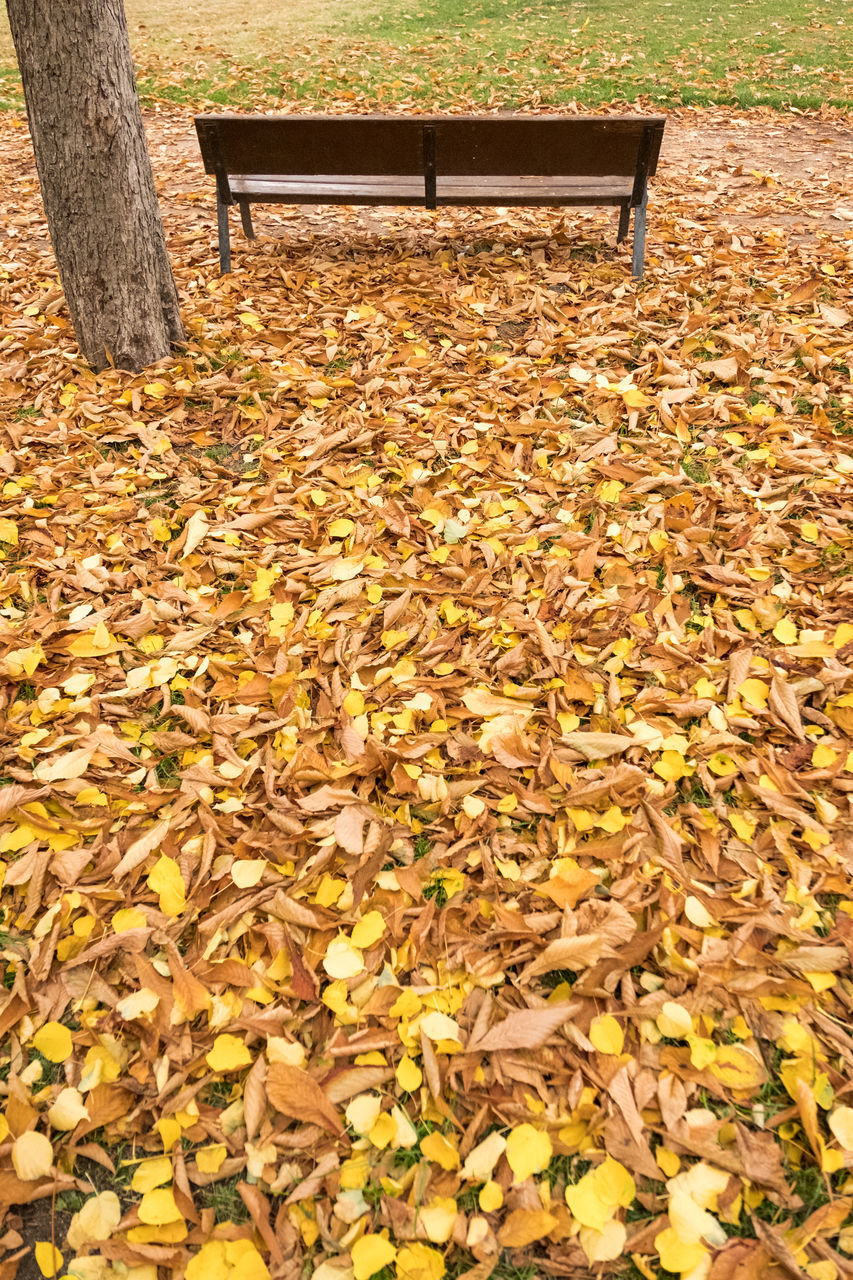 DRY LEAVES ON BENCH IN PARK