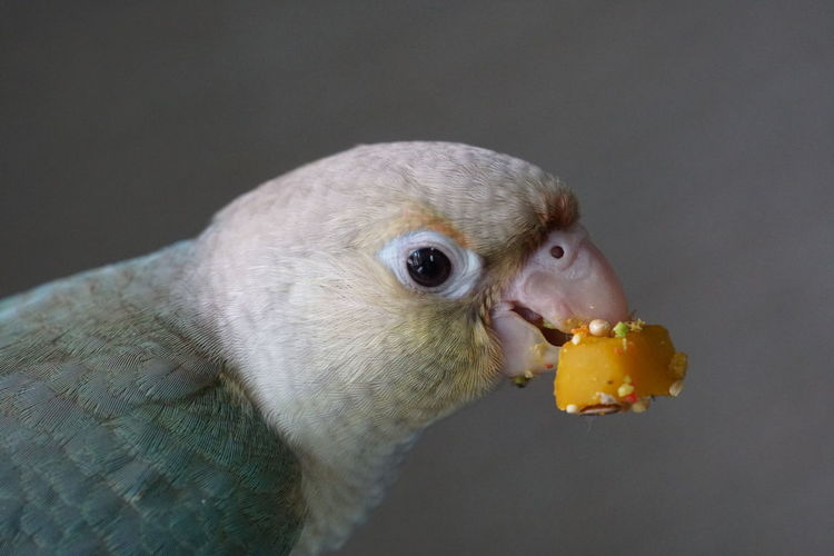Blue eating his
