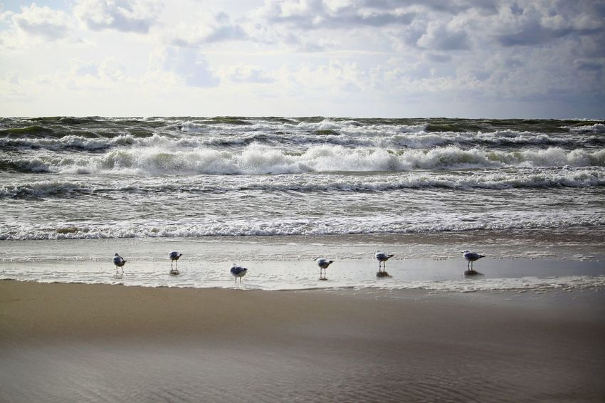 seagulls Bird Low Tide Sea Beach Colony Silhouette Swimming Sky Animal Themes Seascape Flock Of Birds Sea Bird Shore Coast Wave Horizon Over Water