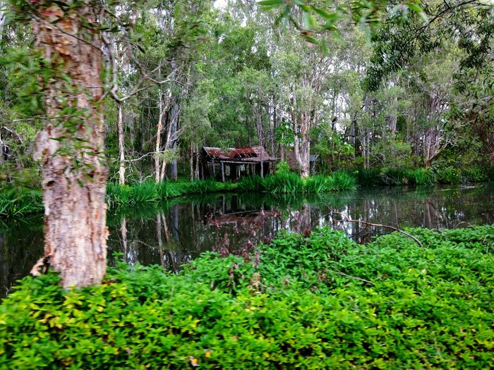Tree Water Tranquility Forest Tranquil Scene Reflection Non-urban Scene Lake Tree Trunk WoodLand Scenics Stream Nature Growth Green Color Beauty In Nature Plant River Day Park - Man Made Space Old House . Architecture . Architecture Photography Architecture Old House In The Forest Old Historical House