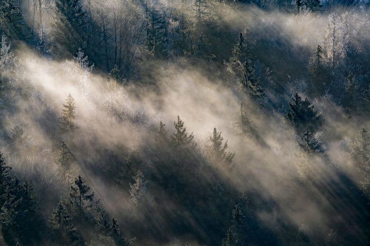 Light rays captured in fog between trees in autumn, hallein, austria