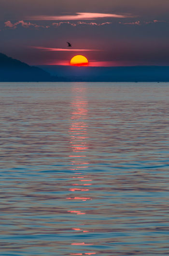 Spectacular sunset at lake constance with bird crossing EyeEmNewHere Lake Constance, Germany Lake Constsnce Beauty In Nature Bodensee Cloud - Sky Day Germany Horizon Over Water Idyllic Nature No People Orange Color Outdoors Reflection Scenics Sea Sky Sun Sunset Tranquil Scene Tranquility Water Waterfront