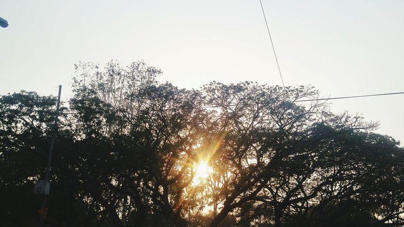 EyeEmNewHere Tree Sunset Transportation Mode Of Transport Sky Nature Outdoors Day No People Communication NewHere ✌🏽️😄 Like4like NewEyeEmPhotographer Architecture Low Angle View Neweyeem Freshness Full Frame