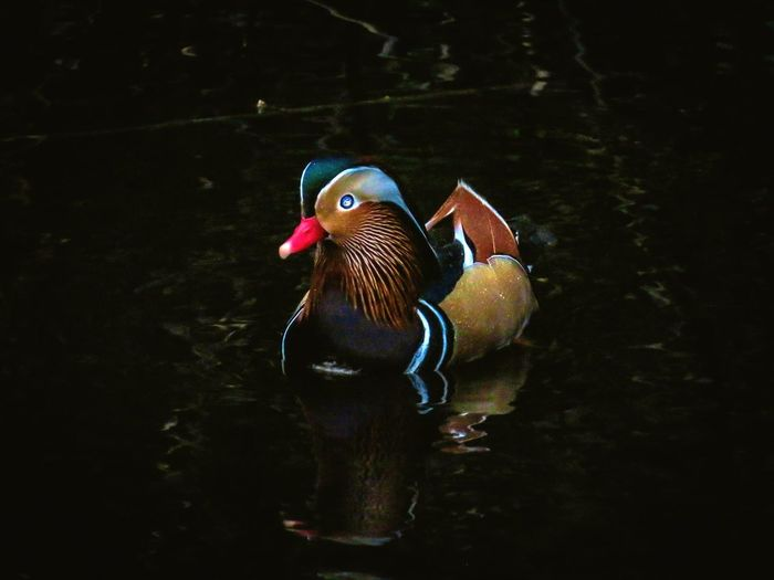 View of a duck in lake