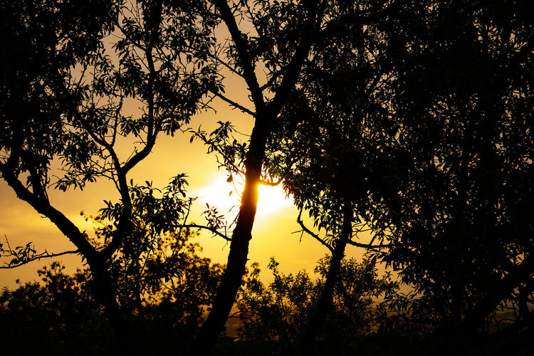 Sunlight streaming through silhouette trees during sunset