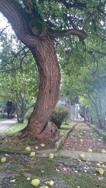 Tree Tree Trunk Green Color Park Nature Outdoors Beauty In Nature Growth