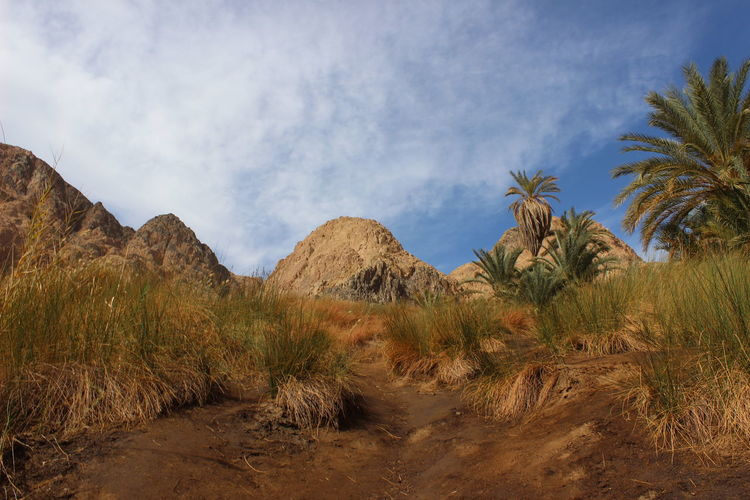 Panoramic View Of Palm Trees On Mountain Against Sky