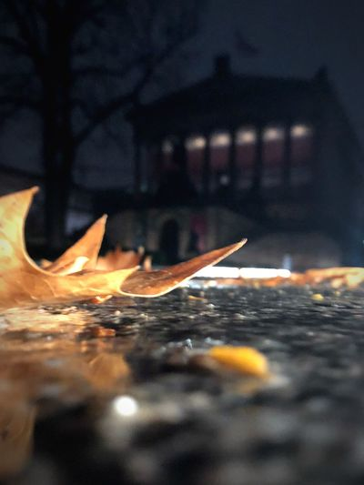 Leaves EyeEm Selects Architecture Nature Water Selective Focus Built Structure Building Exterior Wet Close-up No People