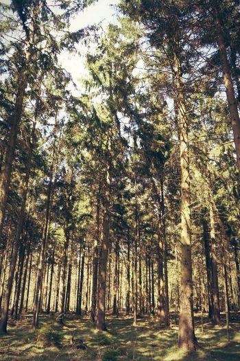 Nature Taking Photos Forest Zandafgraving Gasselte