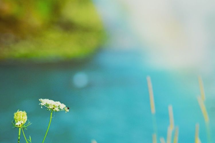 Flower Fragility Freshness Growth Beauty In Nature Dandelion Focus On Foreground Close-up Plant Nature Springtime Flower Head In Bloom Blossom Botany Day Uncultivated Wildflower Petal No People