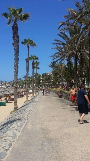 Tree Palm Tree City Clear Sky Sky Sandy Beach Beach Umbrella