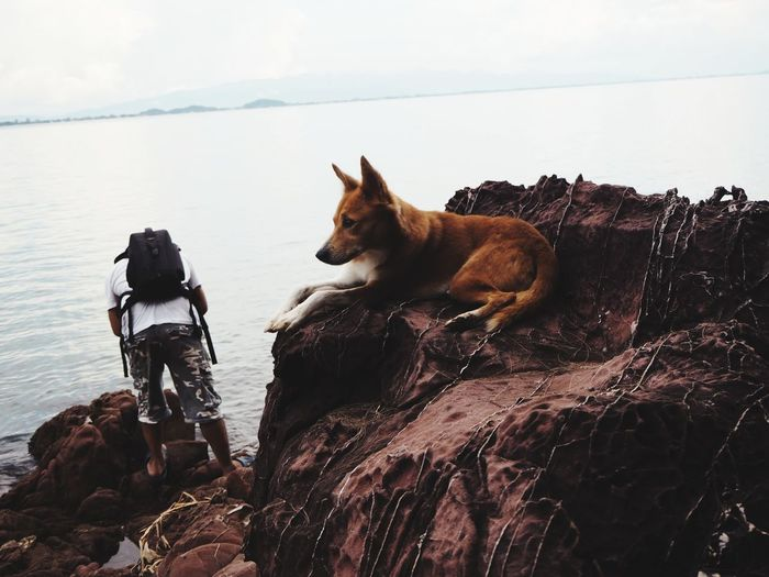 Dog relaxing on rock by sea against sky