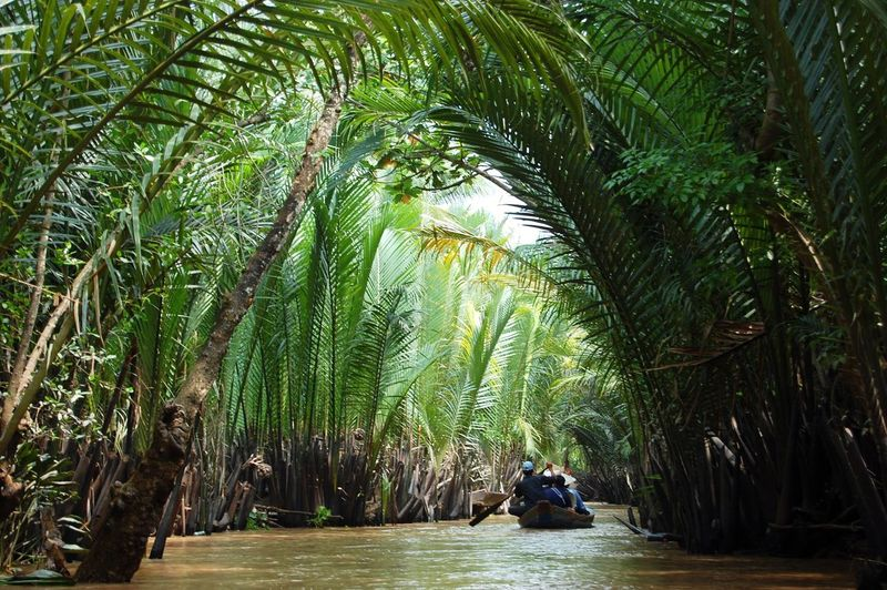 On the Mekong Delta. Mekong River Vietnam Tree Water Nautical Vessel Forest Sitting Bamboo - Plant River Palm Tree Green Color Tree Canopy  Tree Trunk Lush - Description
