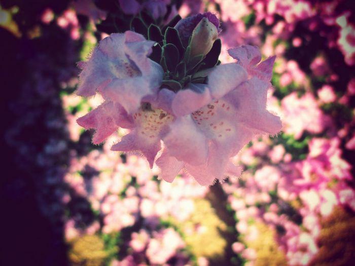 Getting Creative Relaxing Desert Flower California