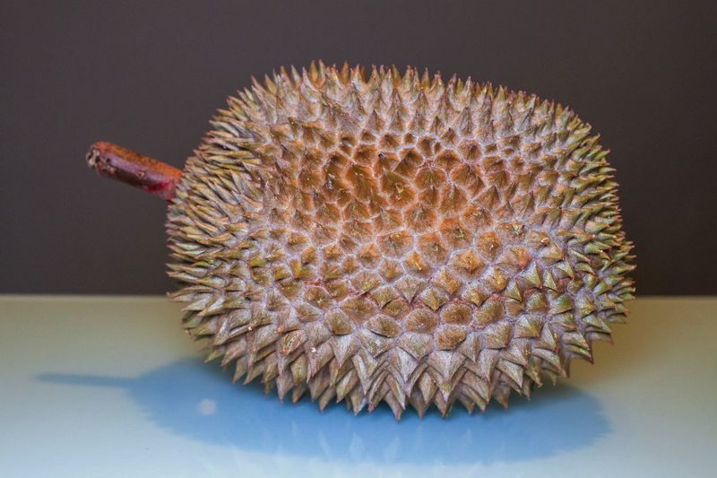 King of Fruit, Durian with aqua and dark grey background for food photography Beauty In Nature Cactus Close-up Day Durian Durian Fruit Durians Flower Flower Head Food Fragility Freshness Growth Indoors  King Nature No People Spiked Yellow