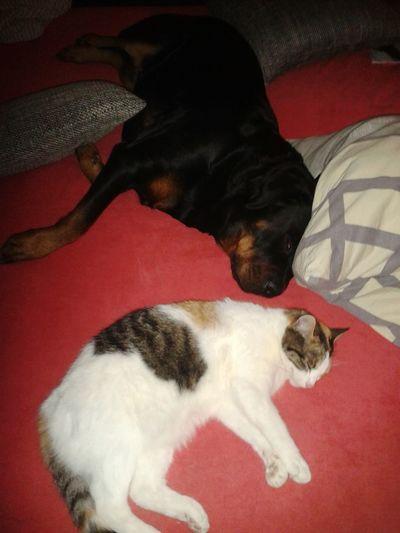 So müde, meine 2 Weiberz -❤ Lilli Mit Freya Schlafenszeit Zwei Wie Hund Und Katze Bei Mir Zu Hause Sleeping Cat Sleeping Dog in my bed .. Things I Like most : my pets are my ♡