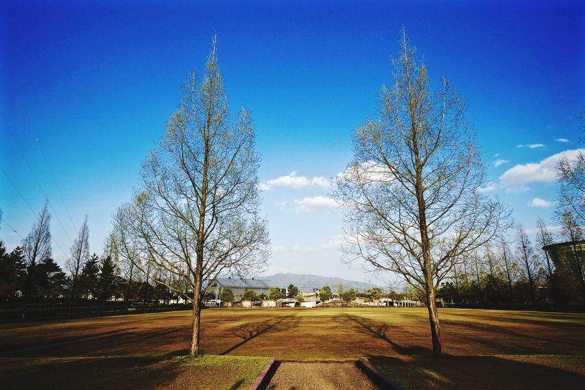 tree Fukui Japan Fujifilm 福井 Trees Sky Park Fujifilm X-E2