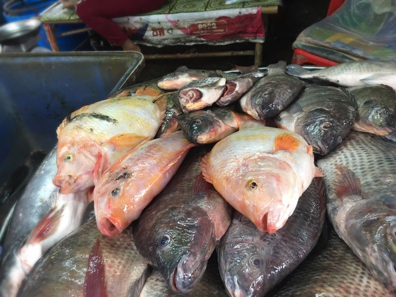 Seafood Fish Food And Drink Food For Sale Market Retail  Market Stall Freshness Fish Market Healthy Eating Raw Food No People Day Indoors  Close-up
