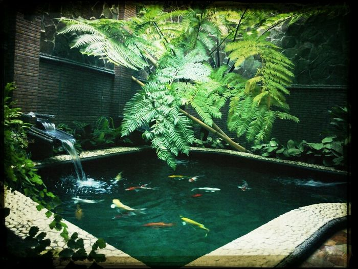 fish pond at the new house in Malang (first photo attempt)