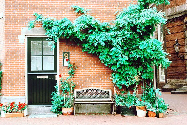 Street Window Box Tree City Ivy Doorway Façade Window House Door Brick Wall Entryway Closed Door Front Door Creeper Plant Porch Entrance
