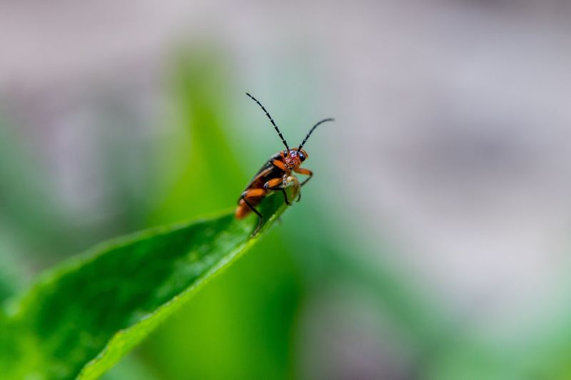 Close-up Insect Garden Green Color Leaf Outdoors No People Nature Plant Bugs Macro Photography Green Color Macro