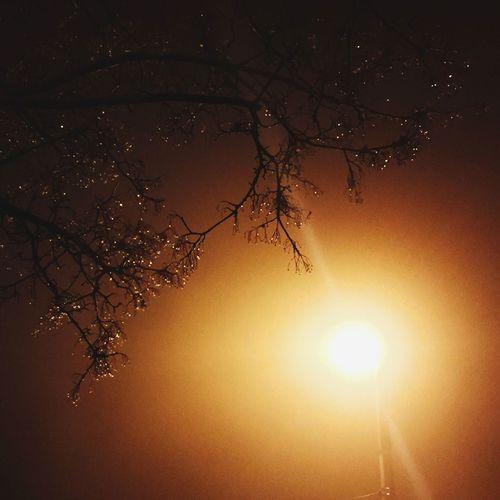 Prague Mist Shiny Drops Drops Branches