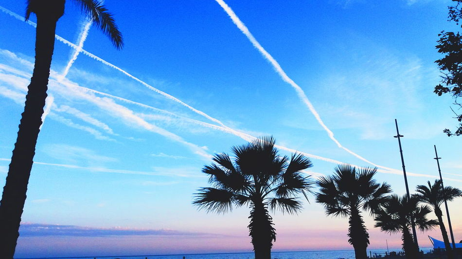 Beach Beauty In Nature Blue Contrail Day Low Angle View Nature No People Outdoors Palm Tree Scenics Sea Sky Tranquil Scene Tranquility Tree Tree Trunk Vapor Trail