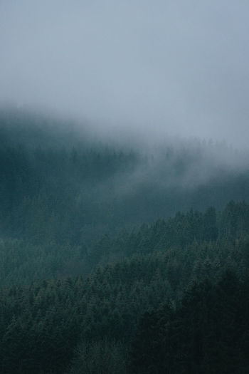 Scenic view of foggy forest against sky