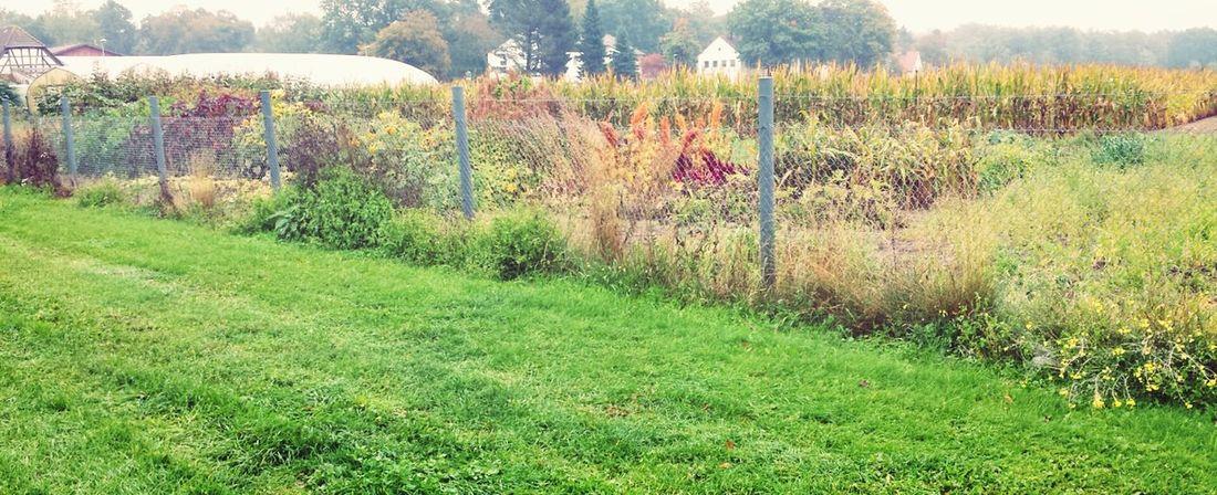 After Work Colors Of Autumn EyeEm Filter Food P Landscape
