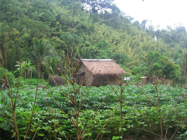 Agriculture Beauty In Nature Day Field Forest Grass Green Color Growth Indigenous People House Landscape Lush Foliage Nature Nipa Hut Nipa Hut In The Mountain No People Outdoors Plant Rural Scene Scenics Simple Life Sky Tranquil Scene Tranquility Tree Vegetable Garden