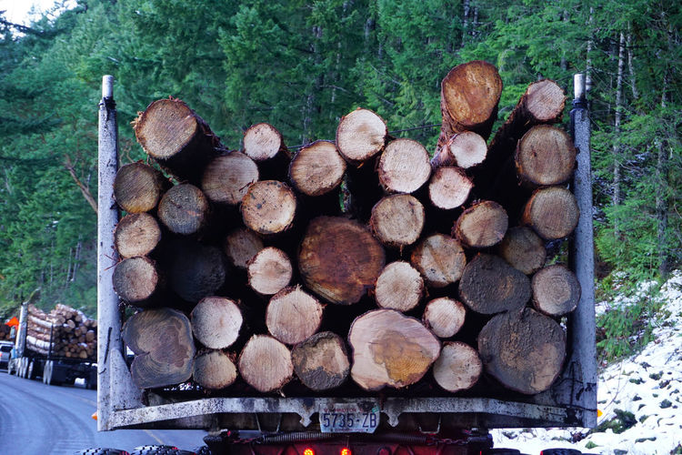 Lake Crescent, Washington logging in winter Lake Crescent, Washington. Washington State Winter Close-up Day Deforestation Environmental Issues Forest Forestry Industry Fossil Fuel Fuel And Power Generation Heap Log Lumber Industry Nature No People Outdoors Pile Stack Timber Tree Tree Trunk Wood - Material Woodpile