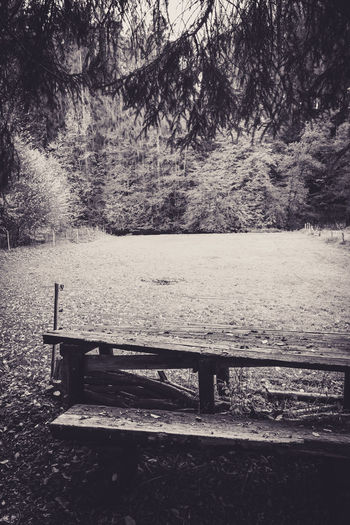 Tree Plant Empty Bench Tranquility Nature Seat No People Park Absence Beauty In Nature Day Tranquil Scene Park Bench Land Wood - Material Water Picnic Table Park - Man Made Space Scenics - Nature Outdoors