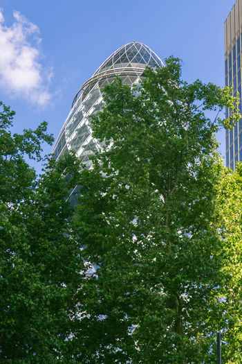 Adapted To The City Architecture Backgrounds City City Of London Cloud - Sky Futuristic Gherkin Gherkin Building Gherkin Tower London London Lifestyle LONDON❤ Low Angle View Modern No People Outdoors Sky Summer Tree The Architect - 2017 EyeEm Awards EyeEm LOST IN London Your Ticket To Europe Postcode Postcards