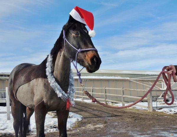 Christmas Funny FUNNY ANIMALS Funnyshit  Horse Liz The Mare Santa Santaclaus