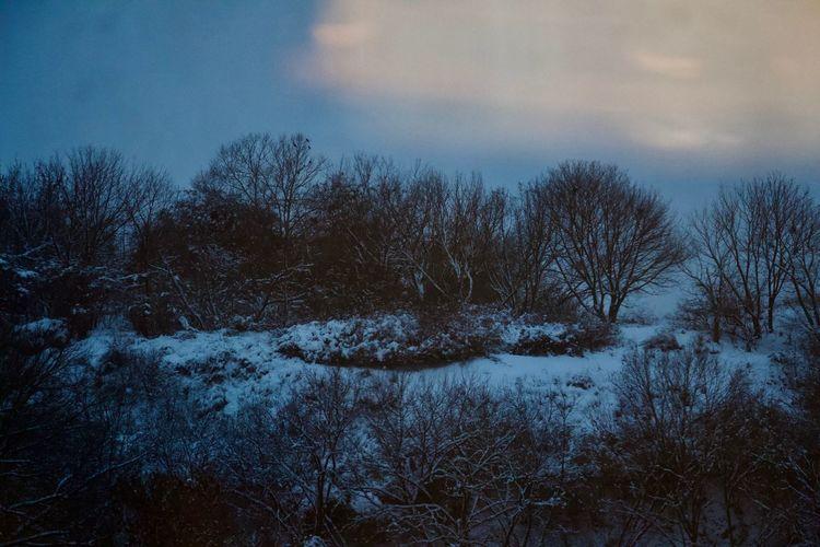 Tree No People Nature Cold Temperature Snow Bare Tree Non-urban Scene Outdoors Land Winter