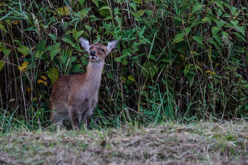 Mammal Standing On Field