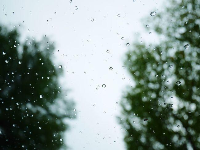 Bokeh Rain RainDrop Wet Weather Focus On Foreground Rainy Season Window Close-up Nature Day No People Tree Rainfall