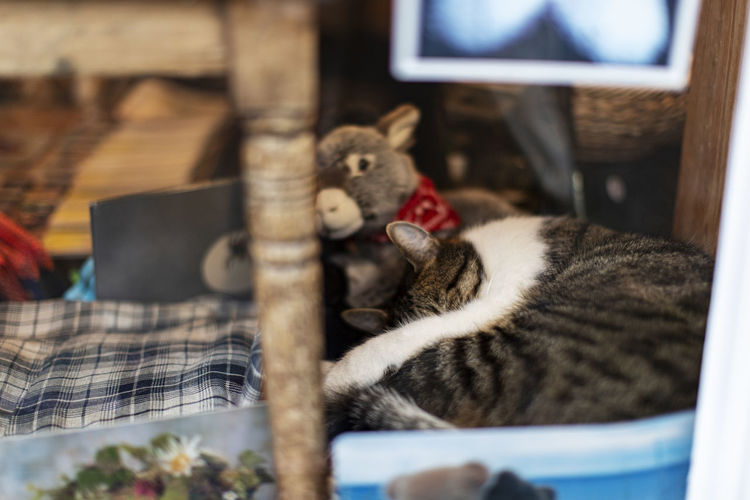 Close-up of cats relaxing at home