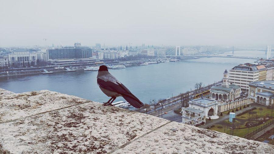 View of bird perching on riverbank