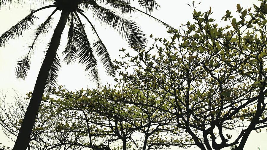 台東海濱公園 Seapark Trees