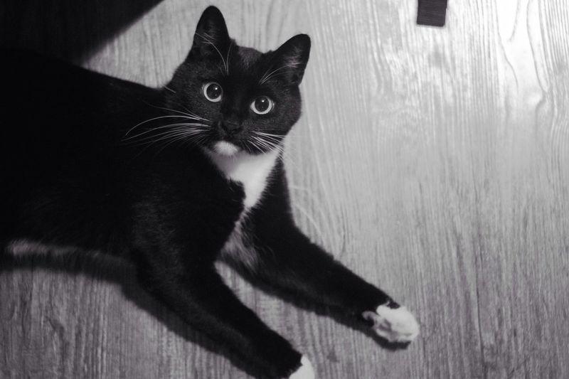 Monochrome Photography Cat Meow пушистая