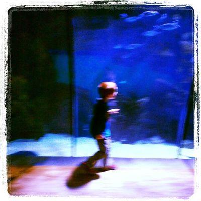 My Son Tiziano moving fast AMD happy into the acquarium in parco Sempione Milan