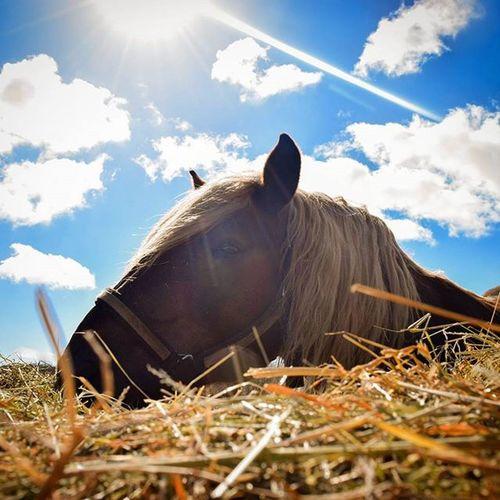 🐴✌ Horse Horses Pferd Pferde Rügen Hungry Horse Team_photunique Animals Animal Animaloftheday Farm Farming Littlefarm Bauernhof Ranch Wirsindinsel Islelife