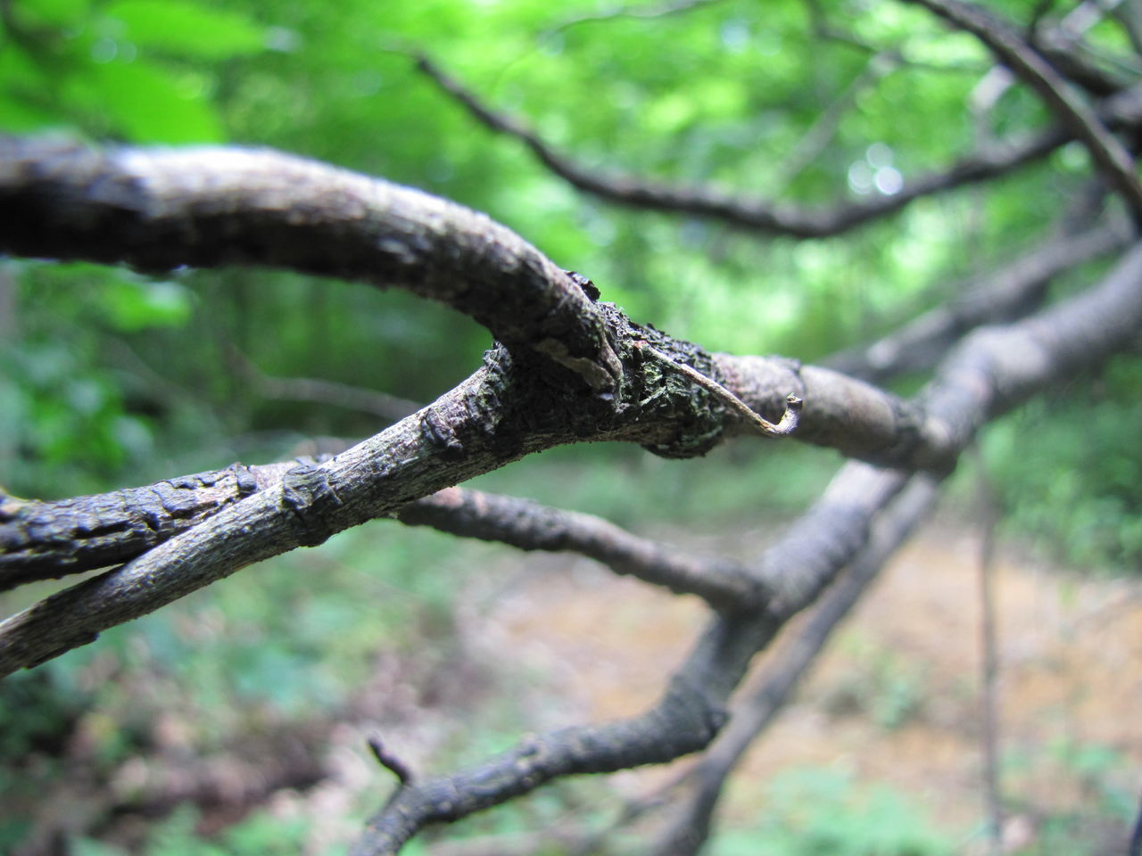 Close-Up Of Twig In Forest