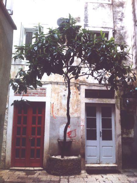 Streetphotography Redandblue Split Croatia Trees Tree Of Life Taking Photos Urban Enjoying Life