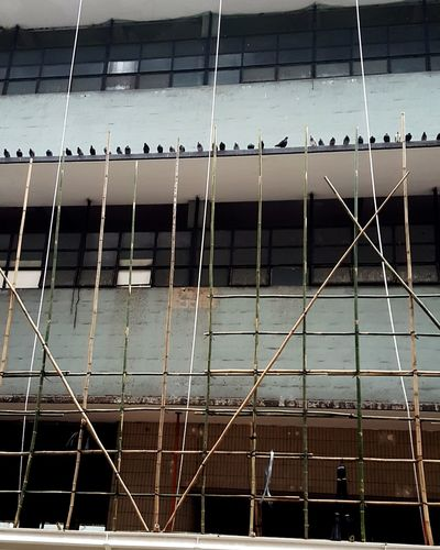 Central Market Scafolding Pigeon Central Market City HongKong No People Outdoors Architecture Day
