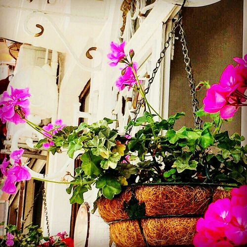Flowers Beautiful ♥ Bloom Balcony Colourful Taking Photos Turkey ♡